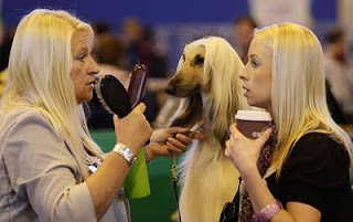 crufts_1_gallery__afghan reuters
