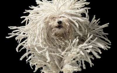 Tim Flach Flying-Mop