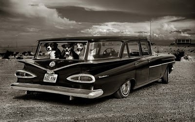 albert watson watchdogs wagon