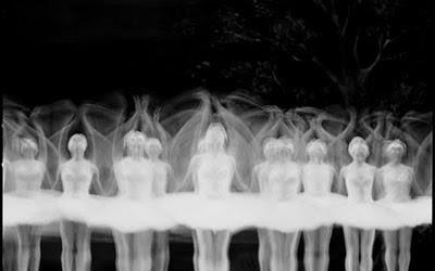 bruce monk swans