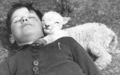 black and white grayscale sleeping boys lambs baby animals old photography children_wallpaperwind.com_21