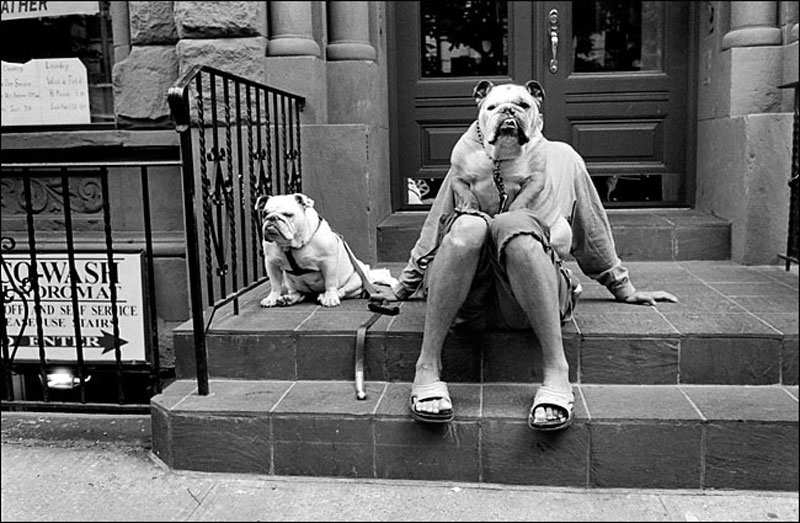 Bull Dogs Photo:  Elliott Erwitt