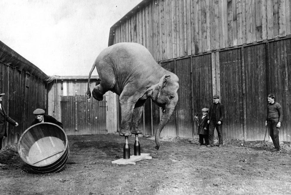 Vintage circus photos (5)
